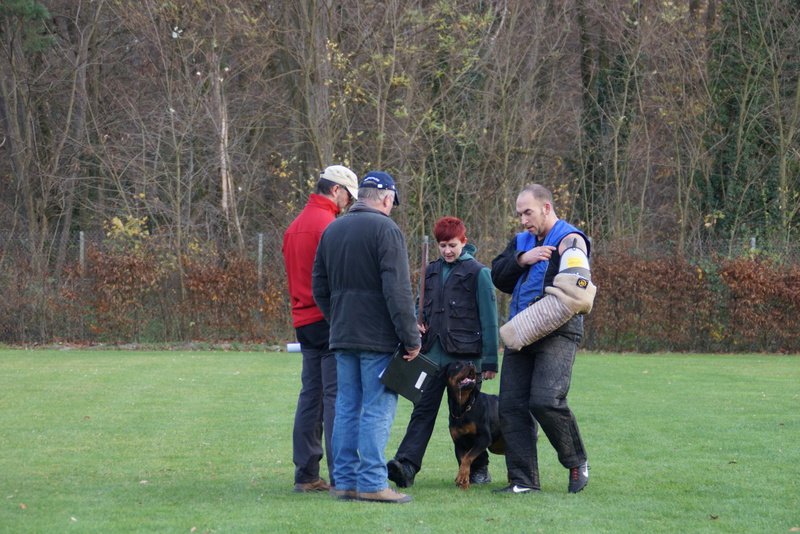 Bezirksgruppe westheim 2015 for Frank westheim